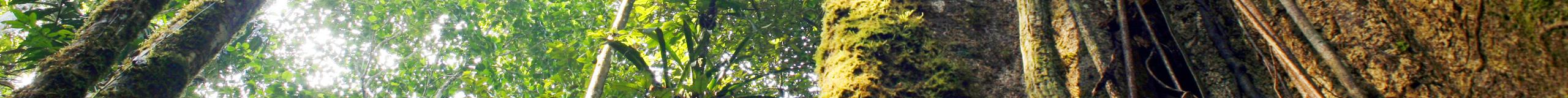 Aventure chez les Malekus, Costa Rica, voyage nature et culture